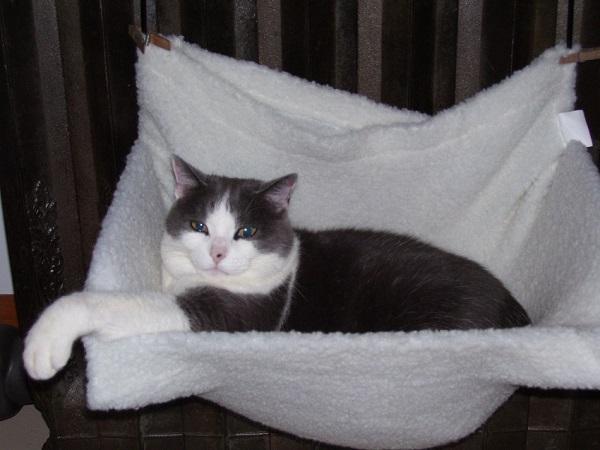 radiator bed for cat on test bench radiator bed for cat on test bench   ecorad  rh   ecorad ca